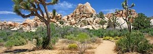 joshua-tree-small California holidays
