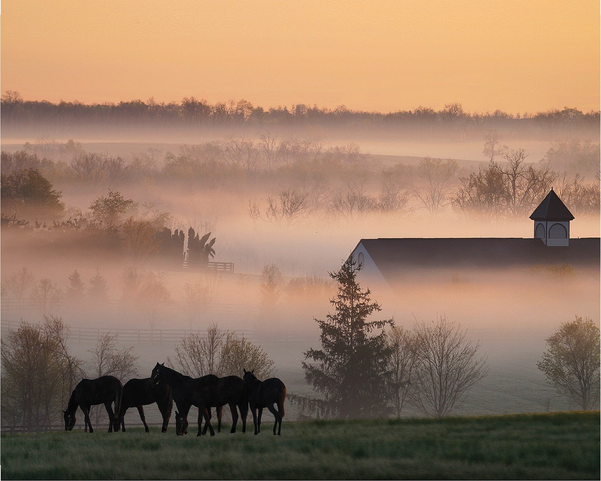 A foggy spring morning in the Bluegrass, Kentucky