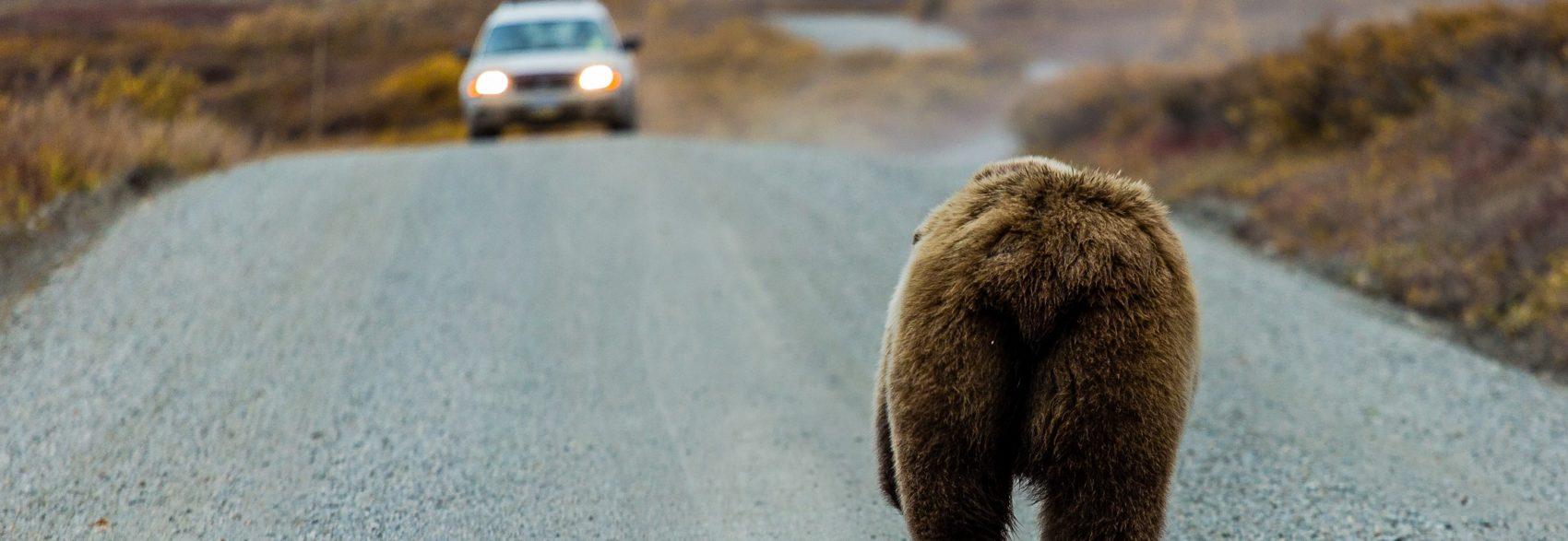 Alaska fly drive holidays
