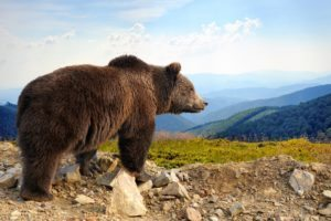 Bears Alaska Holidays