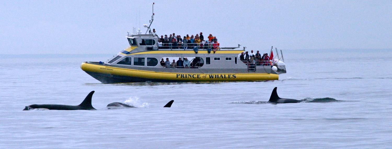 Whale watching, Alberta