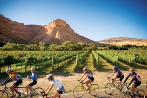Road cycling near vineyards just outside of Grand Junction