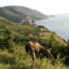 Cabot Trail in Cape Breton Highlands National Park near Cheticamp
