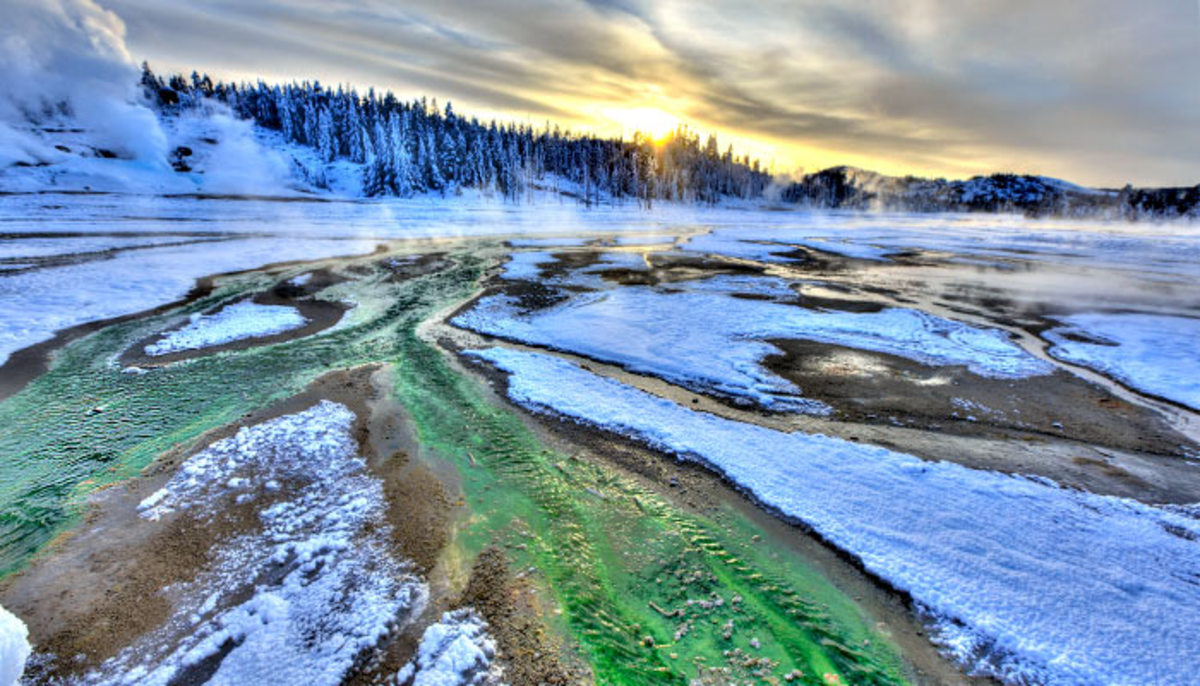 Norrisgeyser Basin, Yellowstone National Park