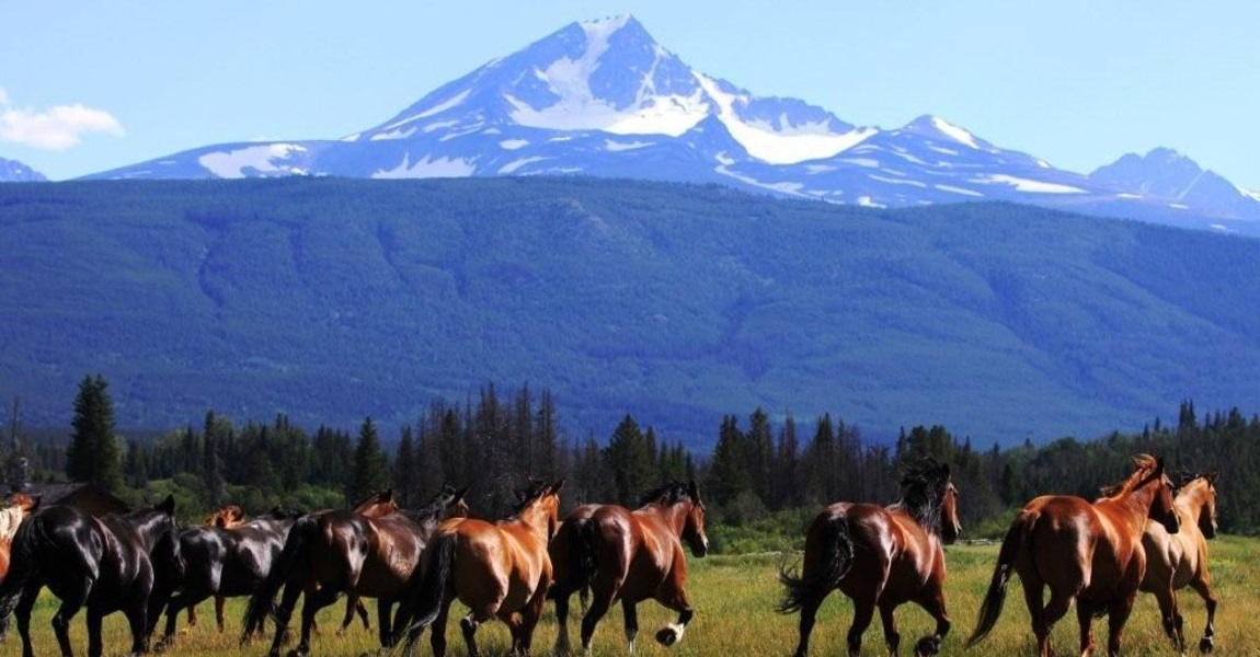 Chilcotin Ranch: The Cowboy Wilderness