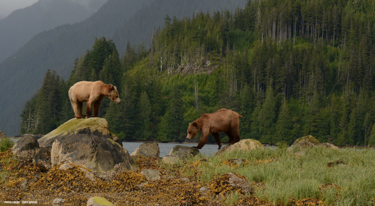 Grizzly Bears of Knight Inlet Lodge Canada Adventure Package