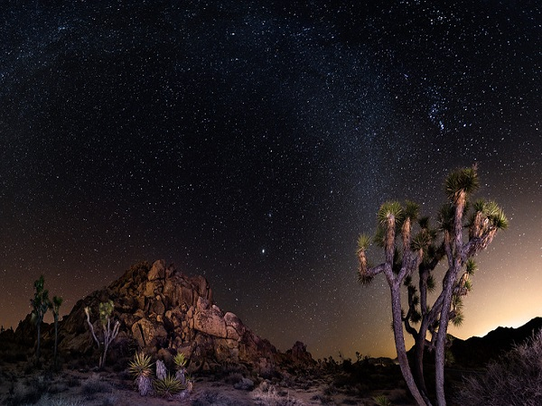 Milky Way and Joshua Trees in Joshua Tree National Park